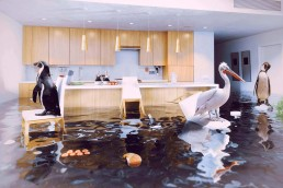 Flooded-home-with-animals